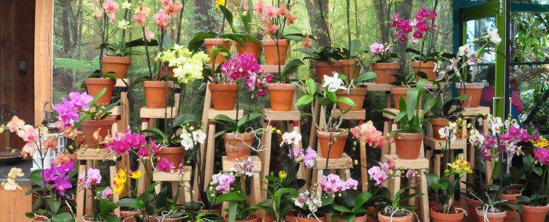 verlotingsplanten