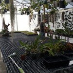 serre Tropiscape Orchids